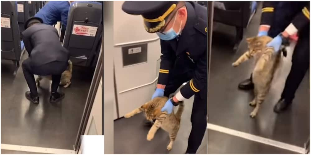 Social media reacts as officer sends cat out of train for not having ticket