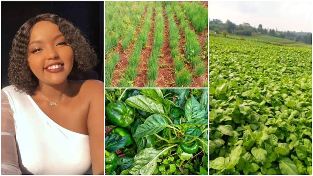Pretty lady succeeds in farming, shows big plantation, says it's great decision