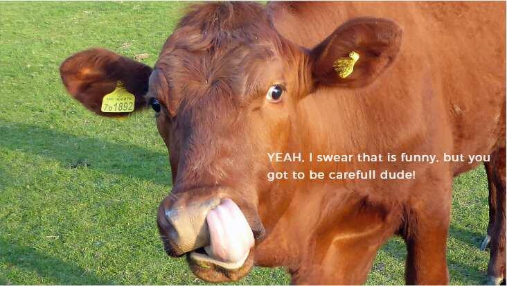 foto de Top 50 funny cow puns jokes one
