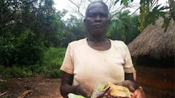 Termites eat elderly couple's N181k they saved in metallic piggy bank for 3 years