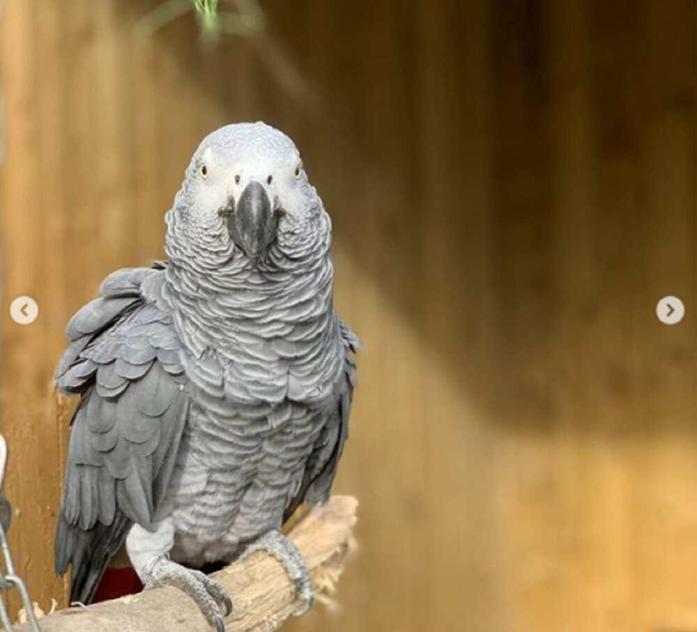 An raba wasu aku 5 a gidan zoo saboda yi wa mutane ashariya (Hotuna)