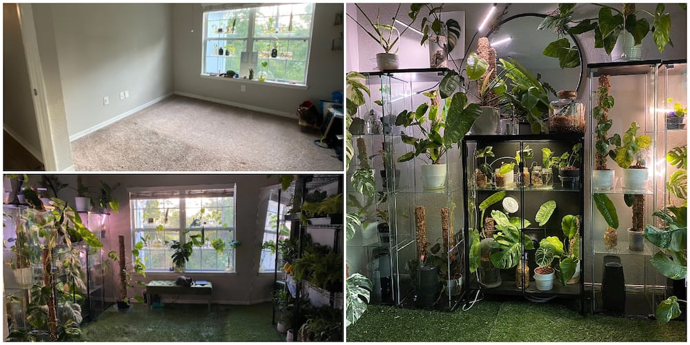 Woman Shows off Her Room Full of Plants, Pictures Send Social Media Users into Frenzy