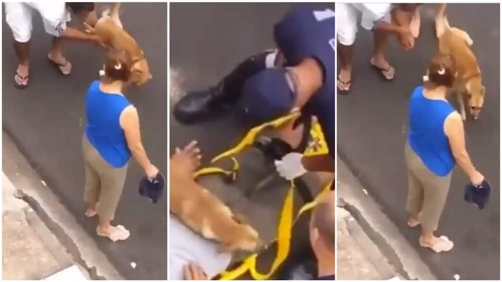 Many were amazed at the dog's action in the video. Photo source: Twitter/@cctv_idiots