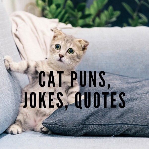 Funny Cat Pics And Quotes - Mew Comedy