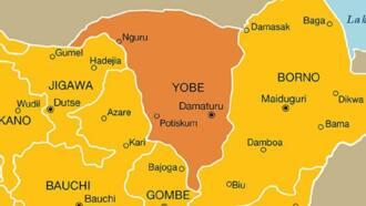 'Yan Boko Haram sun sace tarakta 5 sun banka wa 2 wuta a Yobe