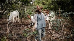 We're coming after you - Northern group sends strong message to herdsmen