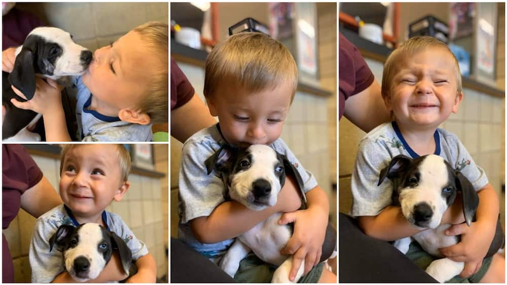 A collage showing the boy and his puppy. Photo source: Facebook/Jackson County Animal Shelter - Michigan