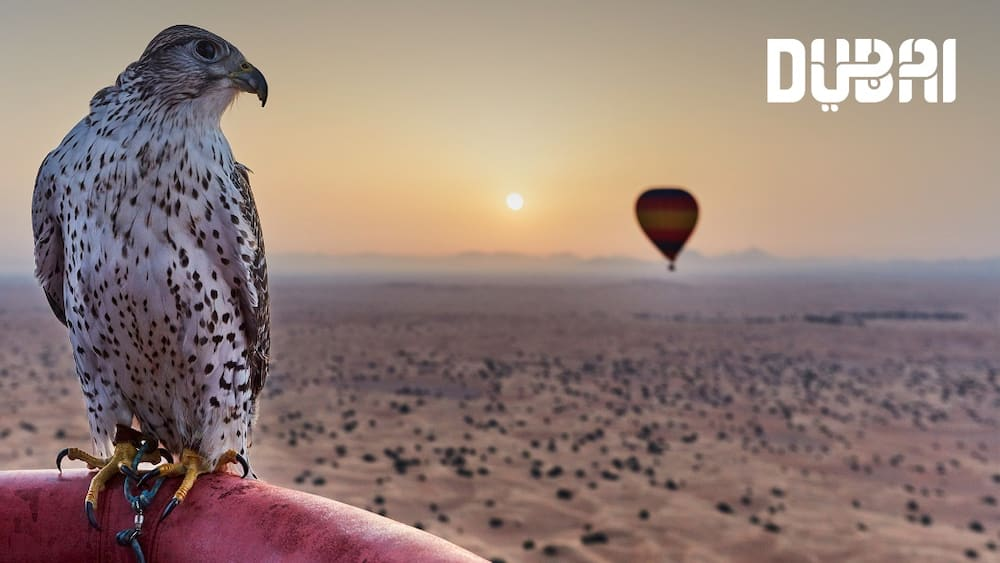 Enjoy private, exciting zoom, teams meetings with Dubai Tourism