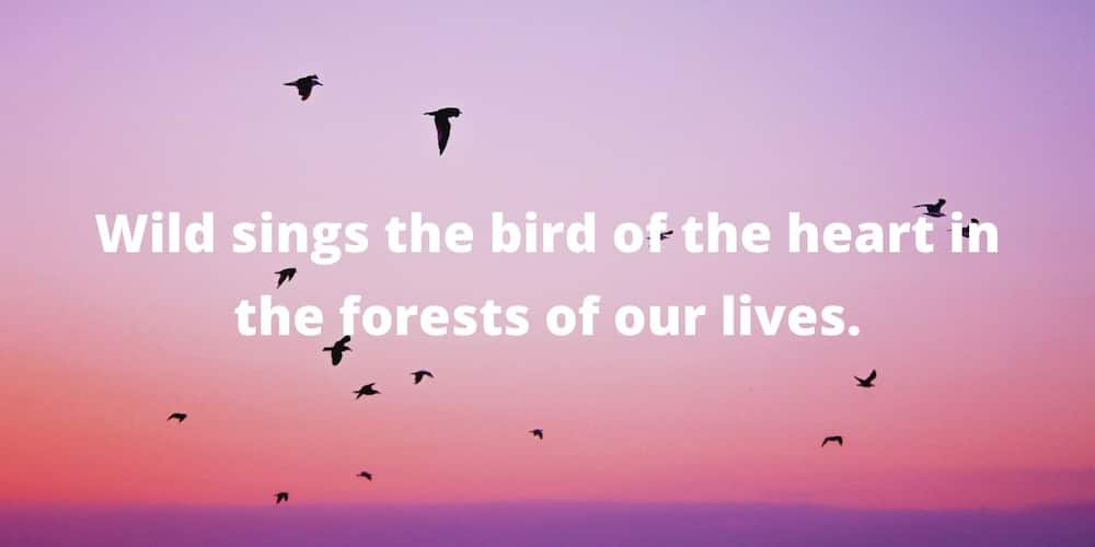 Quotes by Mary Oliver