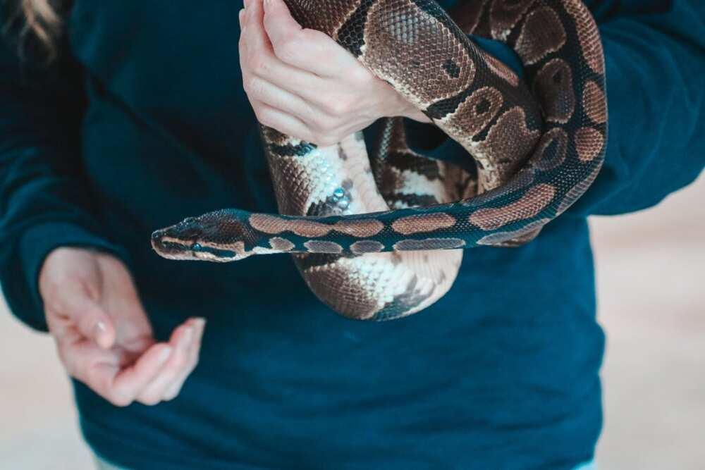 cool snake names