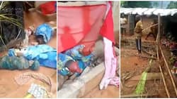 Fake prophetess: Commotion as locals in Agulu uncover fetish objects in a church (video)