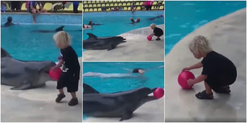 Heartwarming Video Shows Dolphin Playing Ball with Little Boy as They Share Happy Moment Together