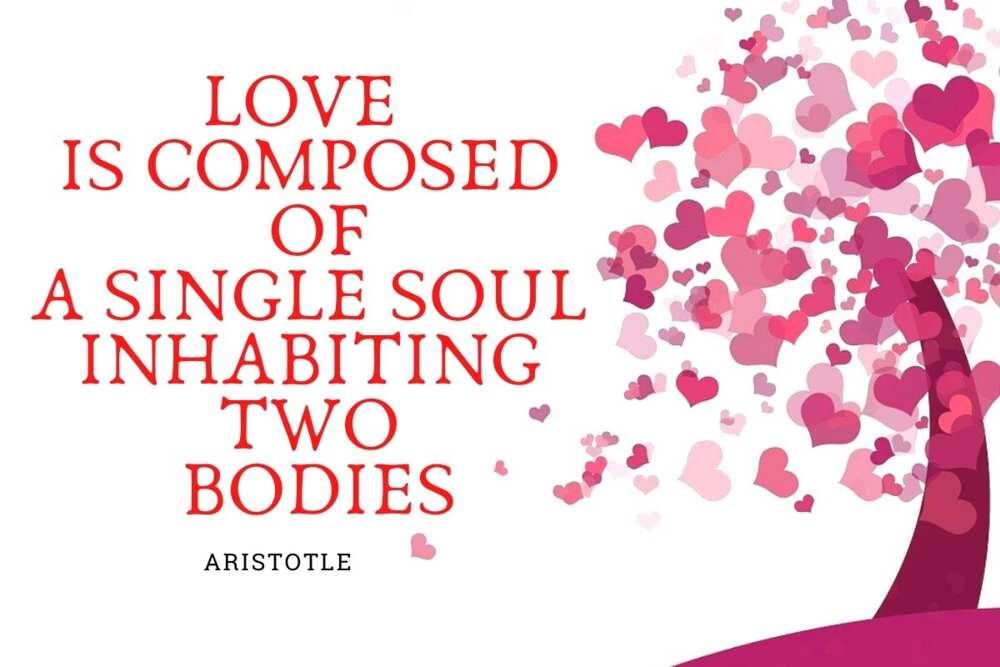 Happy Valentines quotes