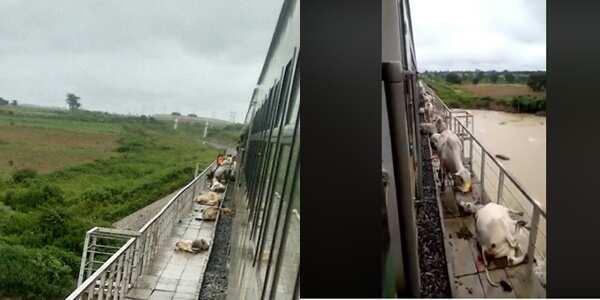 How Kaduna-Abuja train killed 60 cows - Shehu Sani narrates