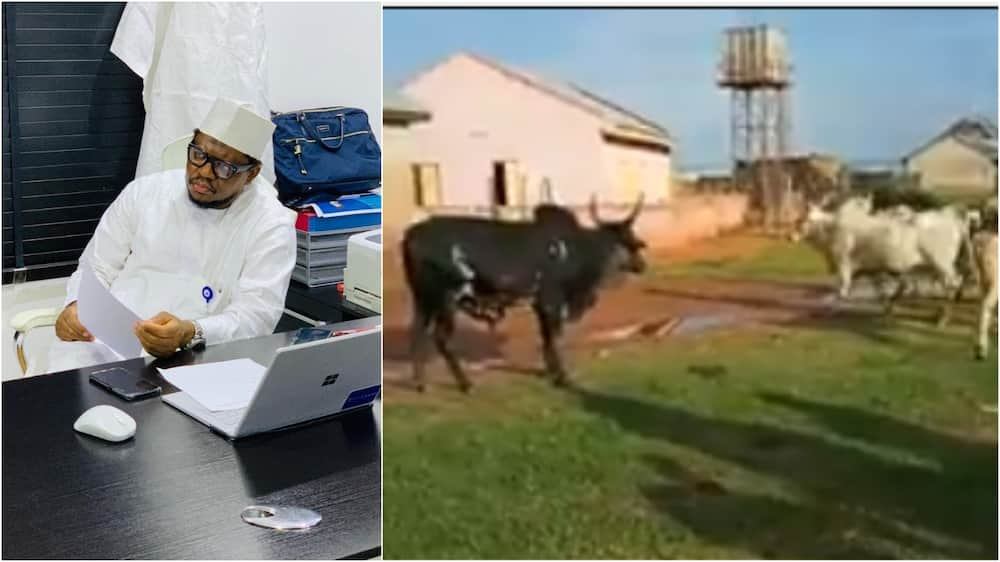 Adamu Garbasays cow ranching business is better than cryptocurrency