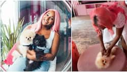My dogs live a better life than me: DJ Cuppy says as she reels in the excitement of motherhood