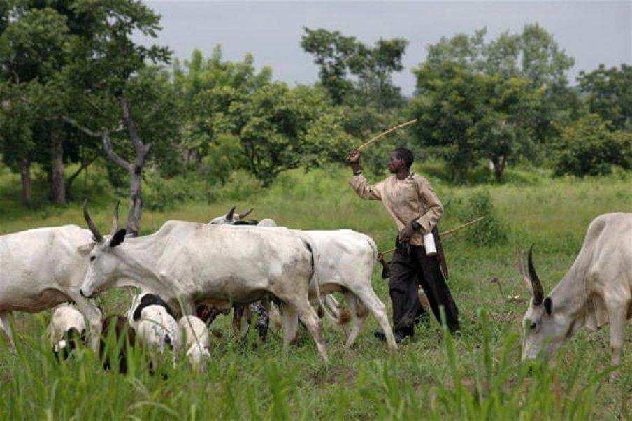 Kiwo a fili: A ba mu lokaci mu horar da Fulani makiyaya, Miyetti Allah ta roki Legas