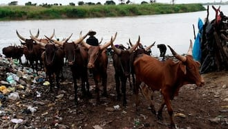 Just in: 32-year-old herdsman sentenced to life imprisonment in southwest state, here's what he did