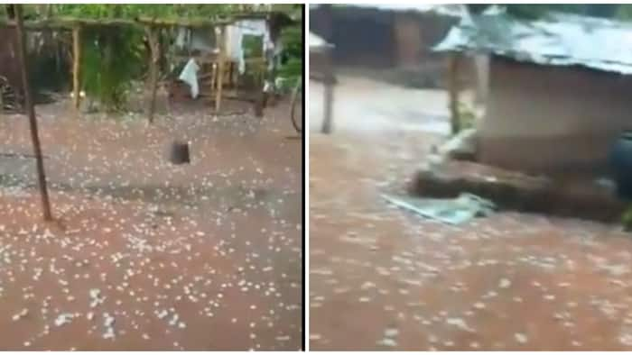 Nigerian man surprised as 'snow' drop down from the sky in his Edo home, viral video stirs massive reactions