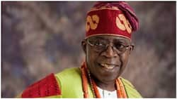 2023: Prominent Northern group declares support for Tinubu, urges parties to adopt him as sole candidate