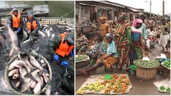 Agric sector contribution to Nigerian economy rises, fish, crop business lead