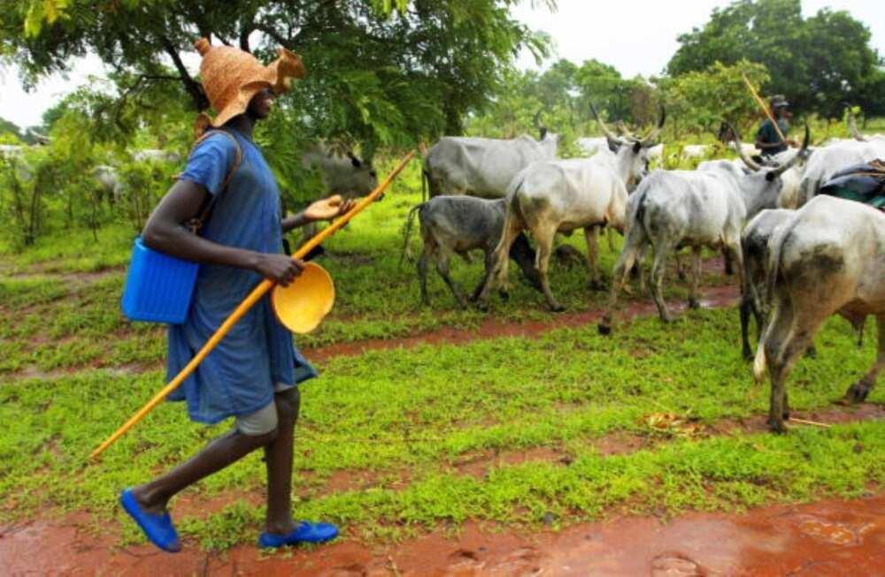 Gani Adams: If care is not taken, there will soon be famine in Yorubaland