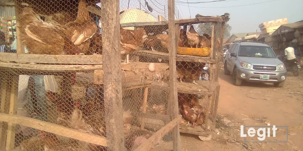 Live chicken on display at a market in Abuja. Photot credit: Esther Odili