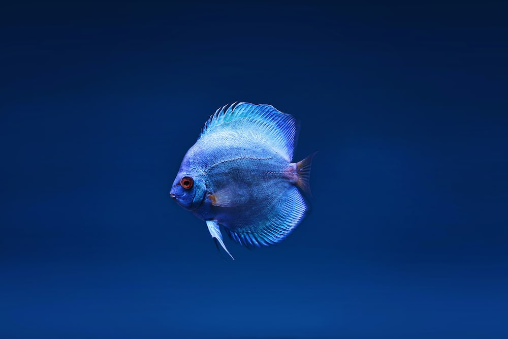 pet fish names