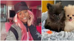 DJ Cuppy after purchasing two dogs: Motherhood is already making me a better person