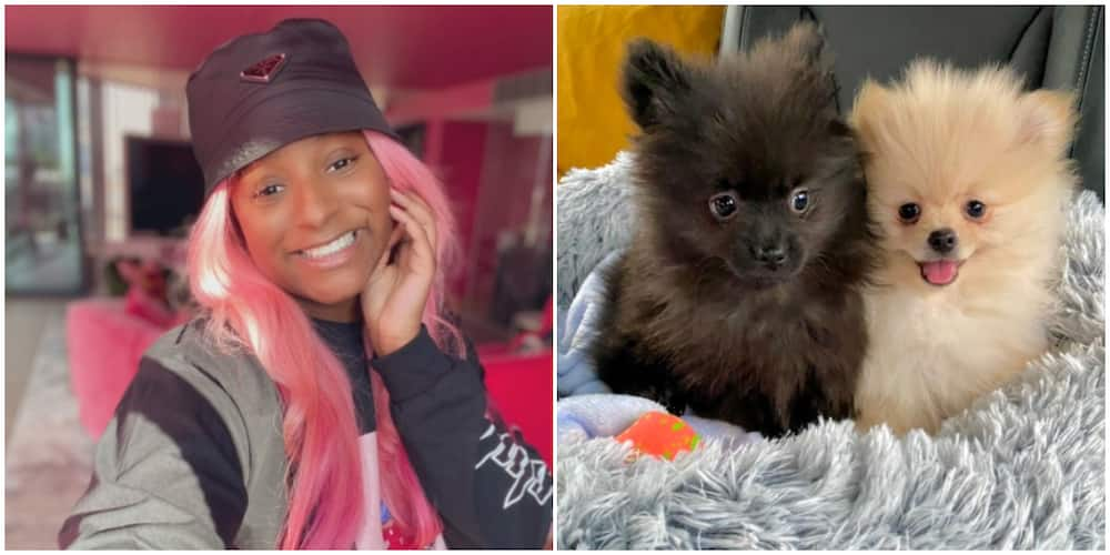 DJ Cuppy after Purchasing 2 Dogs: Motherhood is Already Making Me a Better Person