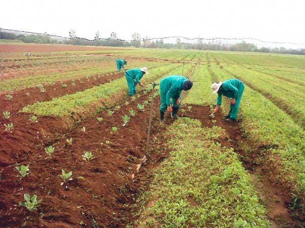 Insurgents persist in using fertilizer for improvised explosives, causes scarcity - Borno farmers