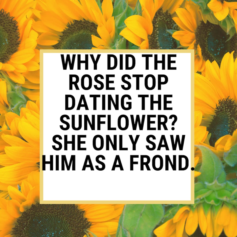 sunflower puns