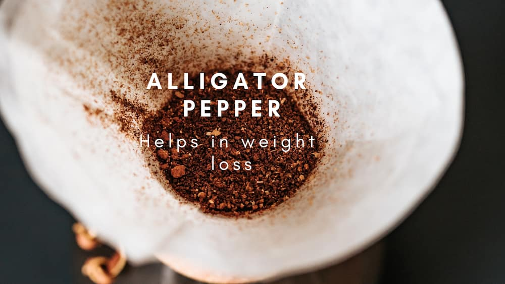 What are the benefits of alligator pepper