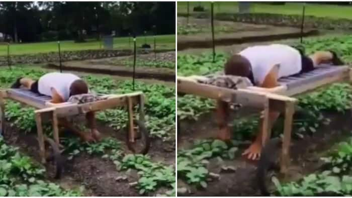 Man lies face-down on bed with wheels to plant crops on farm, video goes viral, stirs mixed reactions