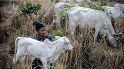 List of 6 southern states yet to enact anti-open grazing law