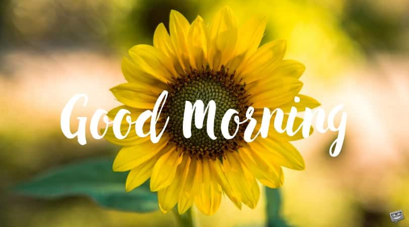 75 best good morning text messages and quotes ▷ Legit ng