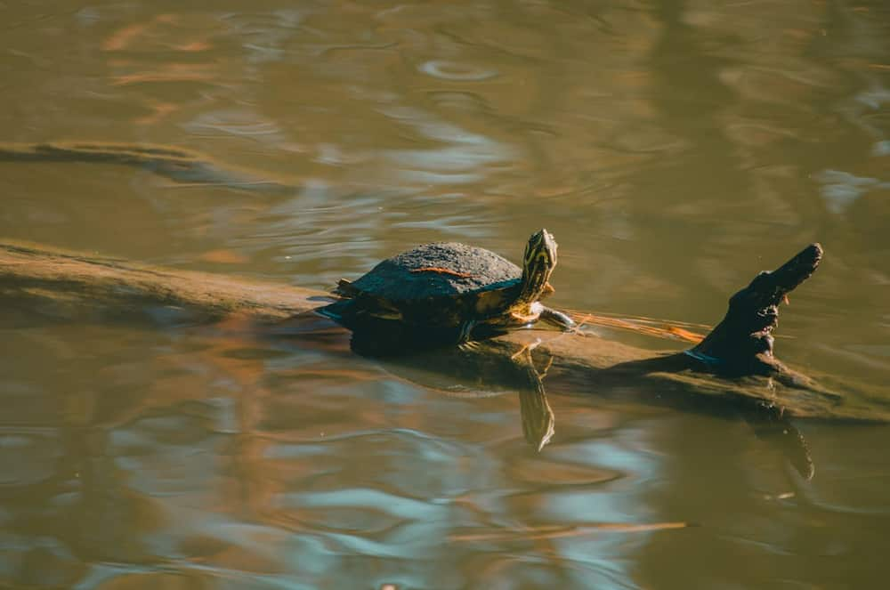 cute names for turtles