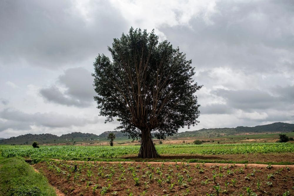 Anxiety as gunmen in military uniform abduct 3 farm managers, demand N45million ransom