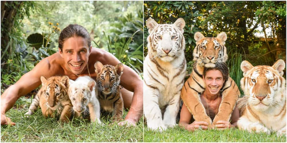 So lovely: Man Stirs Massive Reactions Online after Sharing Before and after Photos of Himself and his Tigers