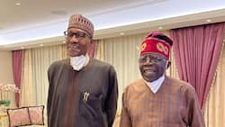 2023 Presidency: Bola Tinubu is recommended as President Buhari's successor
