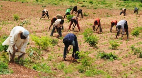 FG to conduct COVID-19 tests for five million farmers, says minister