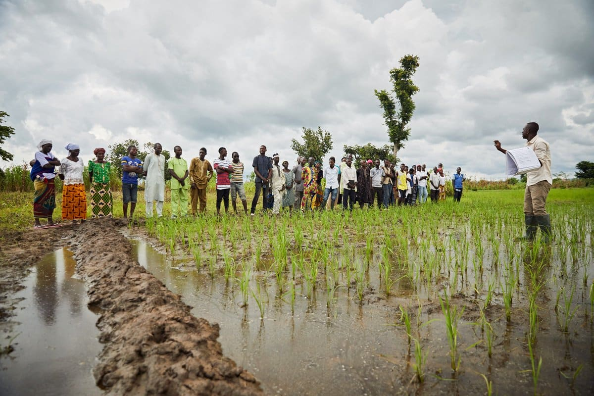Your interventions not reaching us - Kano farmers tell FG