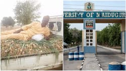 Nigerian university professor harvests onions from his farm, shows them off as he lies on it in viral photo