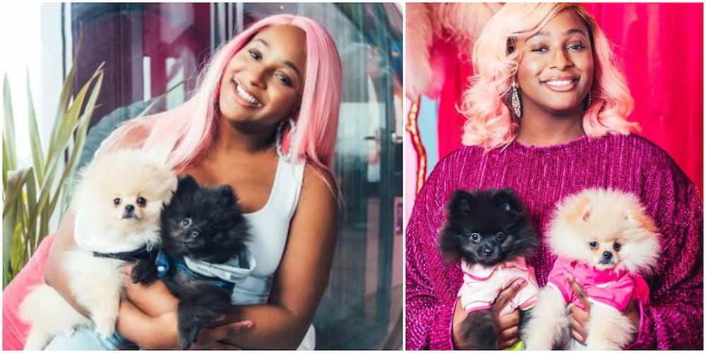 If Dudu and FunFun Don't Like You, We Can't Date: DJ Cuppy Issues New Relationship Criteria to Suitors