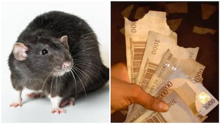 Man calls out Lagos rats, says they are demonic after eating his N1,000 notes (photo)