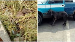 See photos of man who reportedly turned into a dog after getting out of his car in Rivers