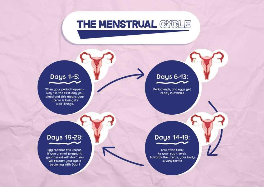 Sign of ovulation
