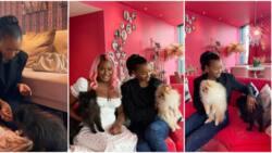 Billionaire's daughter Temi Otedola finally meets big sister DJ Cuppy's dogs, calls them her nephews