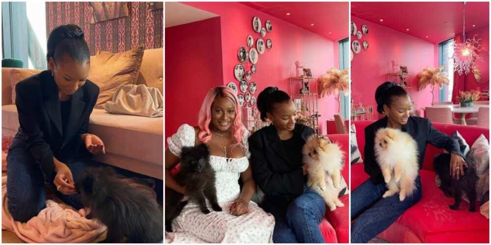 Temi Otedola finally meet big sister DJ Cuppy's dogs, calls them her nephews