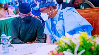 From 2016 to 2021: Breakdown of how much Buhari, Osinbajo have spent on feeding, travels